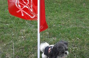 Le chien de garde du piquetage à Victor-Doré.
